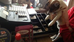 Hunstanton Dog gets caught with paws in the till