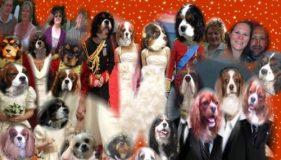 Barking Bugle Wedding Exclusive!