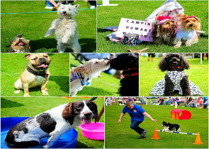 The Hunstanton Fun Dog Show, Glebe House School, Cromer Road, Hunstanton PE36 6HW | Fun Dog Show - 12 classes to enter with rosettes to a massive 10th place! | dog show, outdoors, animal event,