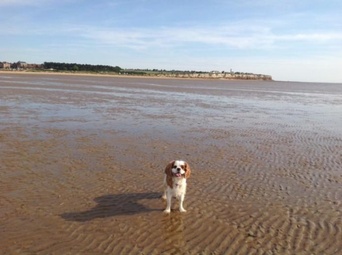 Holkham Beach Dog Restrictions