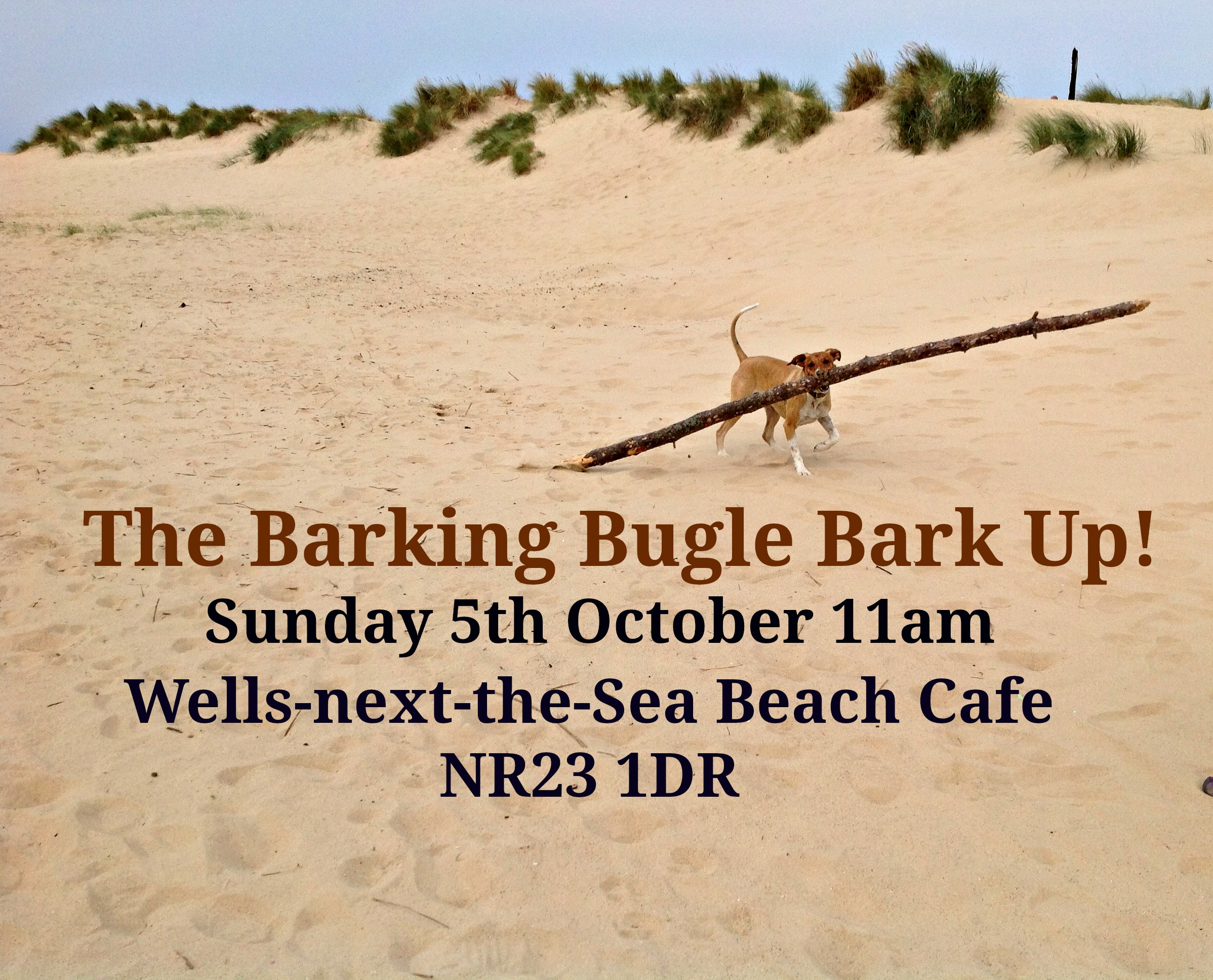 The Barking Bugle Bark Up!, Wells-next-the-Sea Beach Cafe | Calling All Dogs!  Come along to the Barking Bugle Bark Up! A social event especially for dogs and their 2 legged pets.  | Barking Bugle, PACT Animal Sanctuary, Dogs, Dog walk,