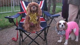 Cavaliers meet The Royal Family at Sandringham on Christmas Day