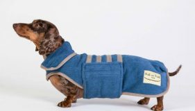 Top Dog Model Shines With The Stars!