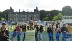 Houghton International – Agility Show Report