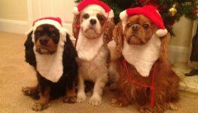 Us Furbabies Love Santa Paws & Christmas