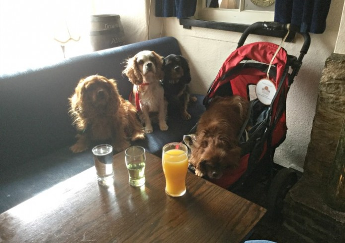 Doggy Dorset