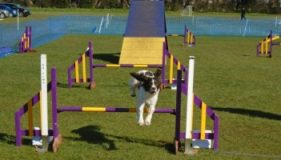 The Barking Bugle Agility Show  – Results
