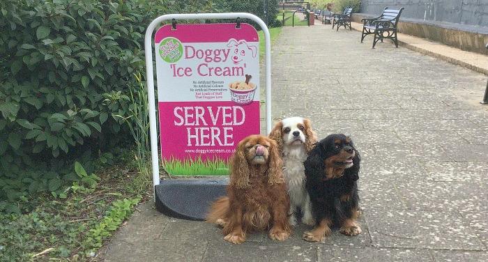 Doggy Ice Cream
