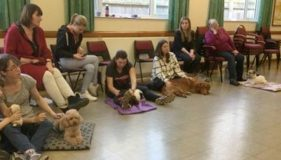 Hunstanton Dogs enjoy a Massage Day!