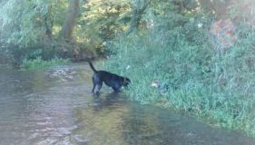 Water Intoxication in Dogs by Lily
