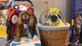 Doug the Pug – A Working Dog's Tale