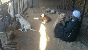 Animal Welfare of Luxor
