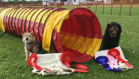 Jumping for Joy at Coldham Agility Show