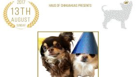 Chihuahuas needed for Guinness World Record Attempt