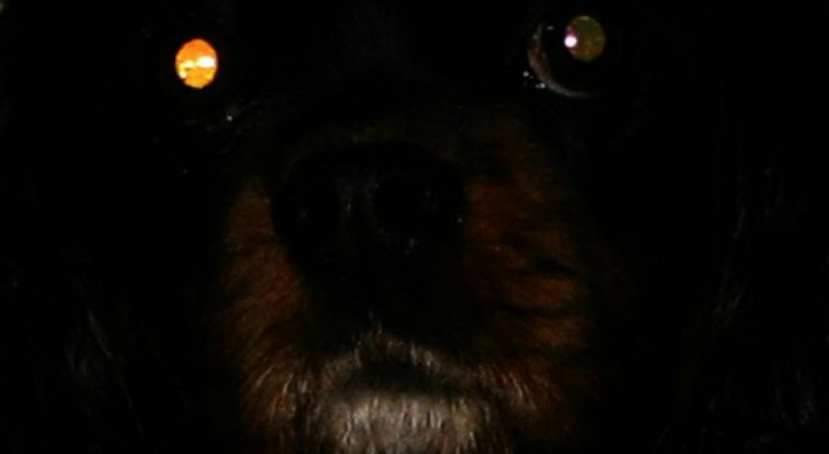 The Black Dog of East Anglia