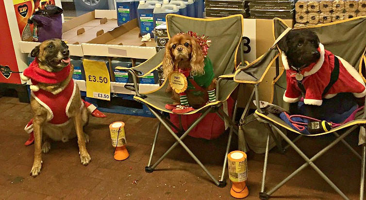 Dogs lend a paw to help homeless animals this Christmas
