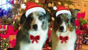 Pawesome Pressie ideas for Christmas!