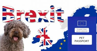 What a no deal Brexit means for dogs!
