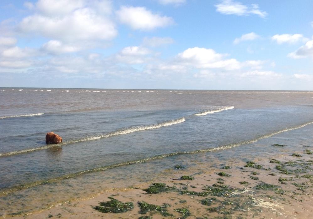 Dog Friendly Beaches - The Barking BugleThe Barking Bugle